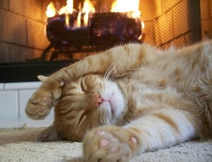 cat-sleeping-fireplace